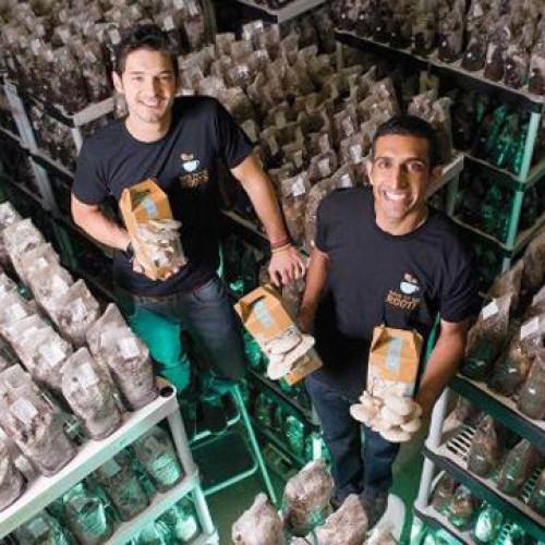 Caffè e funghi insieme per un business sostenibile