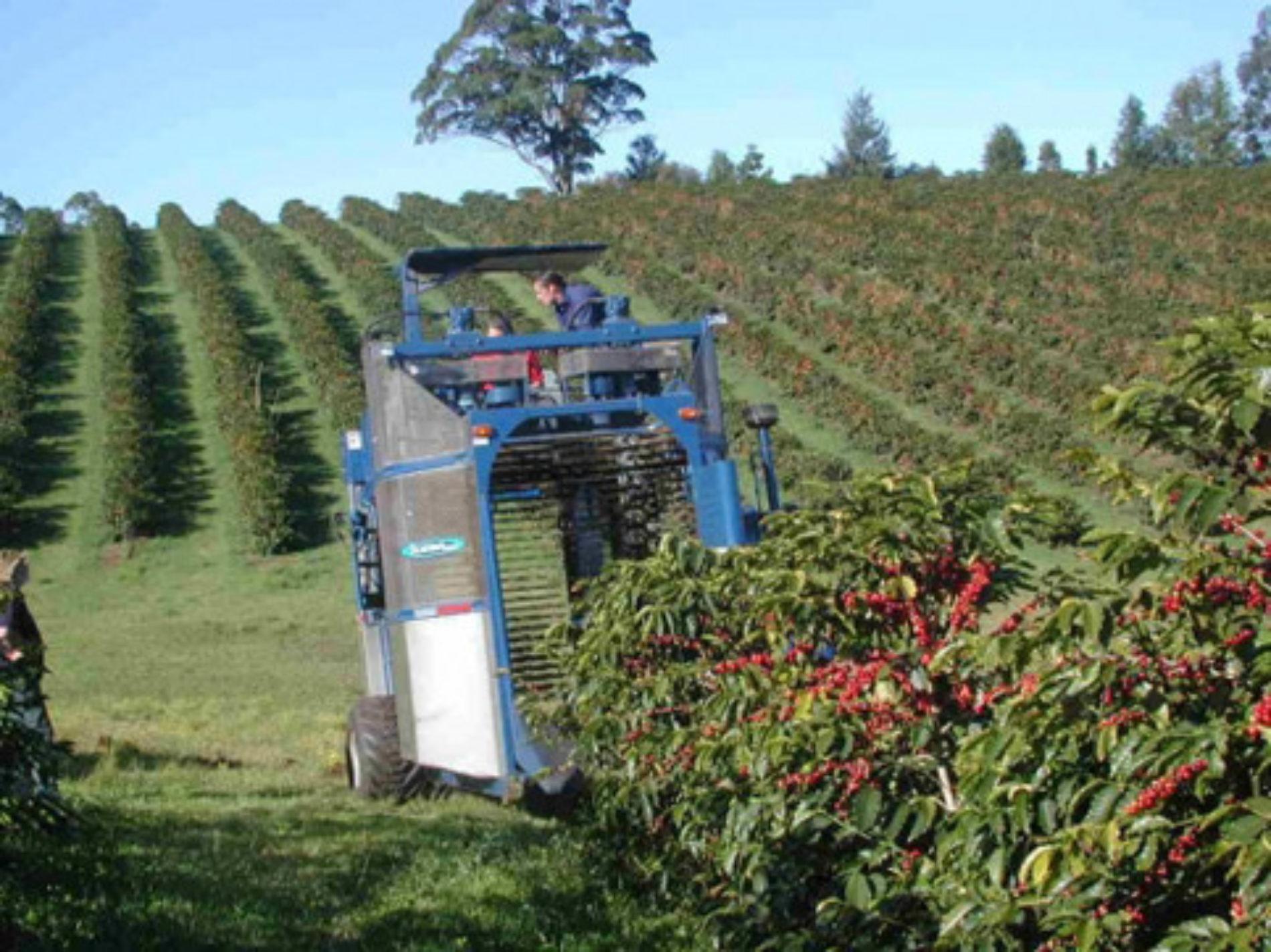 La meccanizzazione della raccolta di caffè in Brasile è al 20%