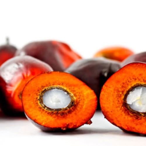 Ferrero, l'olio di palma e i consumatori