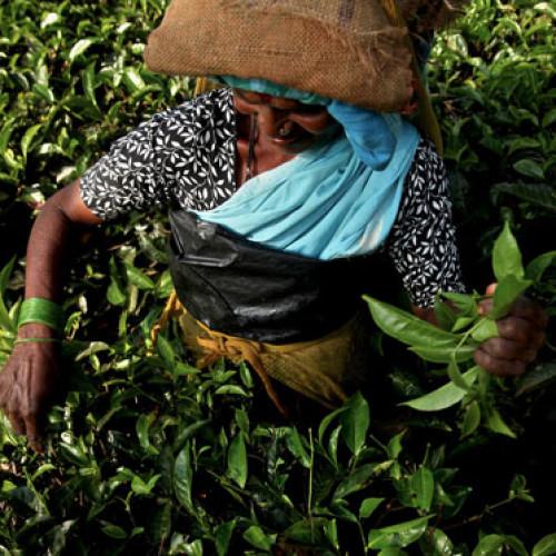 """8 marzo – Il nostro omaggio alle """"donne del caffè"""""""