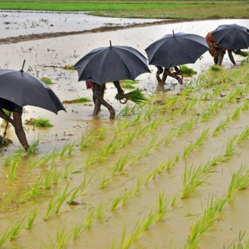 Arriva El Nino. A rischio i caffè africani