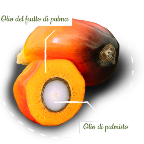 Le aziende alimentari italiane si alleano per l'olio di palma