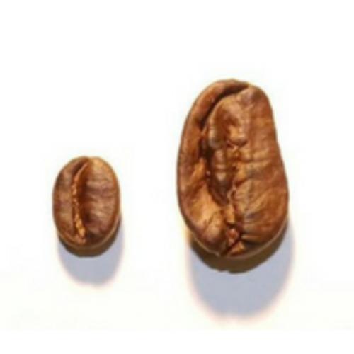 """Per H2biz il """"biz"""" è nel mercato del caffè"""