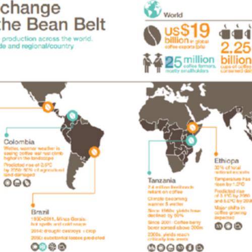 Produzione di caffè: drastico calo entro il 2050