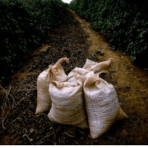 Il Brasile corre il rischio di dover importare il caffè