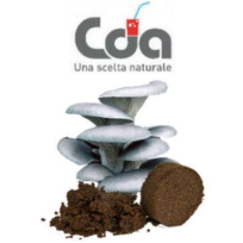 CDA Cattelan: dai fondi di caffè ai funghi
