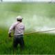 Il caffè importato dal Brasile contiene residui di pesticidi?