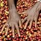 Siglato l'accordo a sostegno del caffè etiope