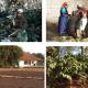 Il viaggio in India di CSC – Caffè Speciali Certificati