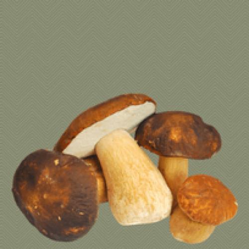 Si ottiene dai funghi il sostituto dello zucchero