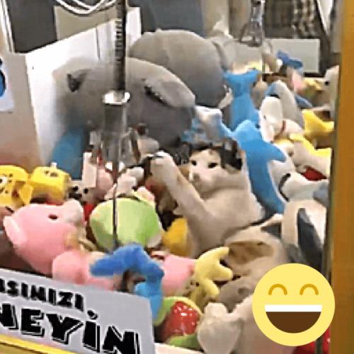 Distributore automatico di peluche con sorpresa!