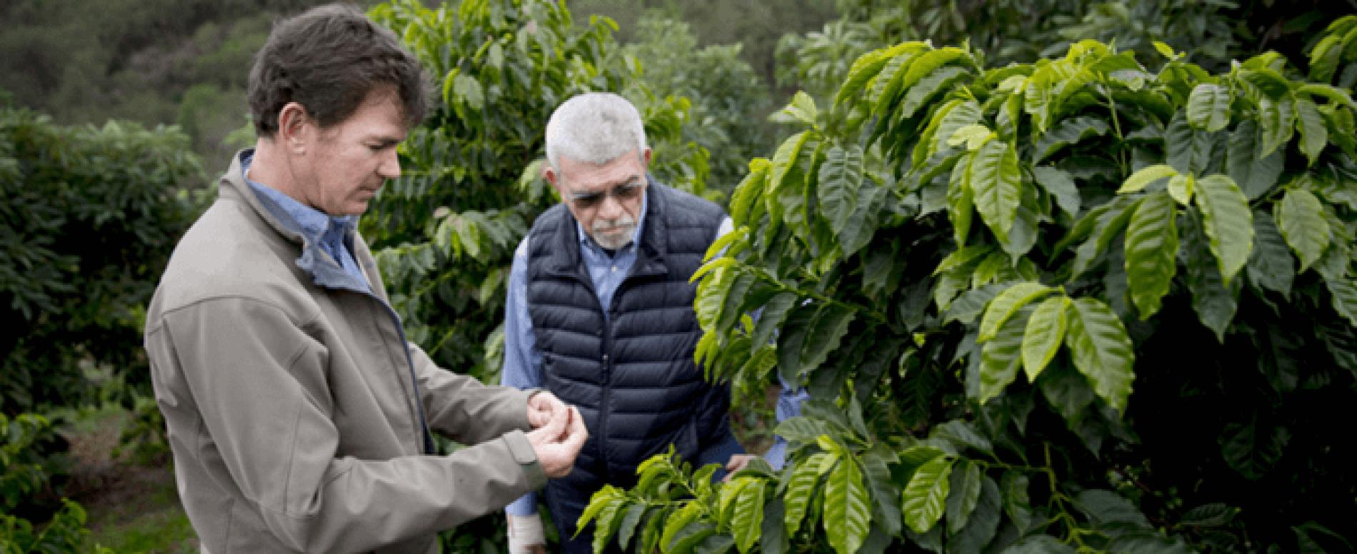 La California produce ottimo caffè e sfata tutte le teorie