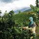 L'impegno di Lavazza in Colombia sostiene la rinascita del caffè