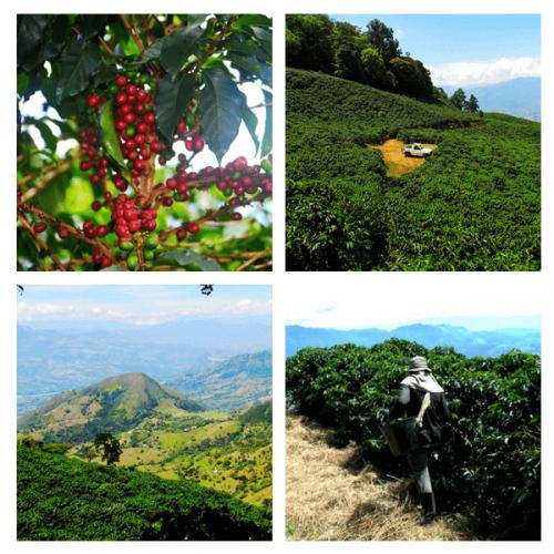 CSC – Caffè Speciali Certificati: dalla Colombia un caffè intenso dal gusto bilanciato
