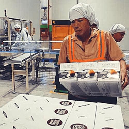 Nestlé apre in Vietnam uno stabilimento per le Dolce Gusto
