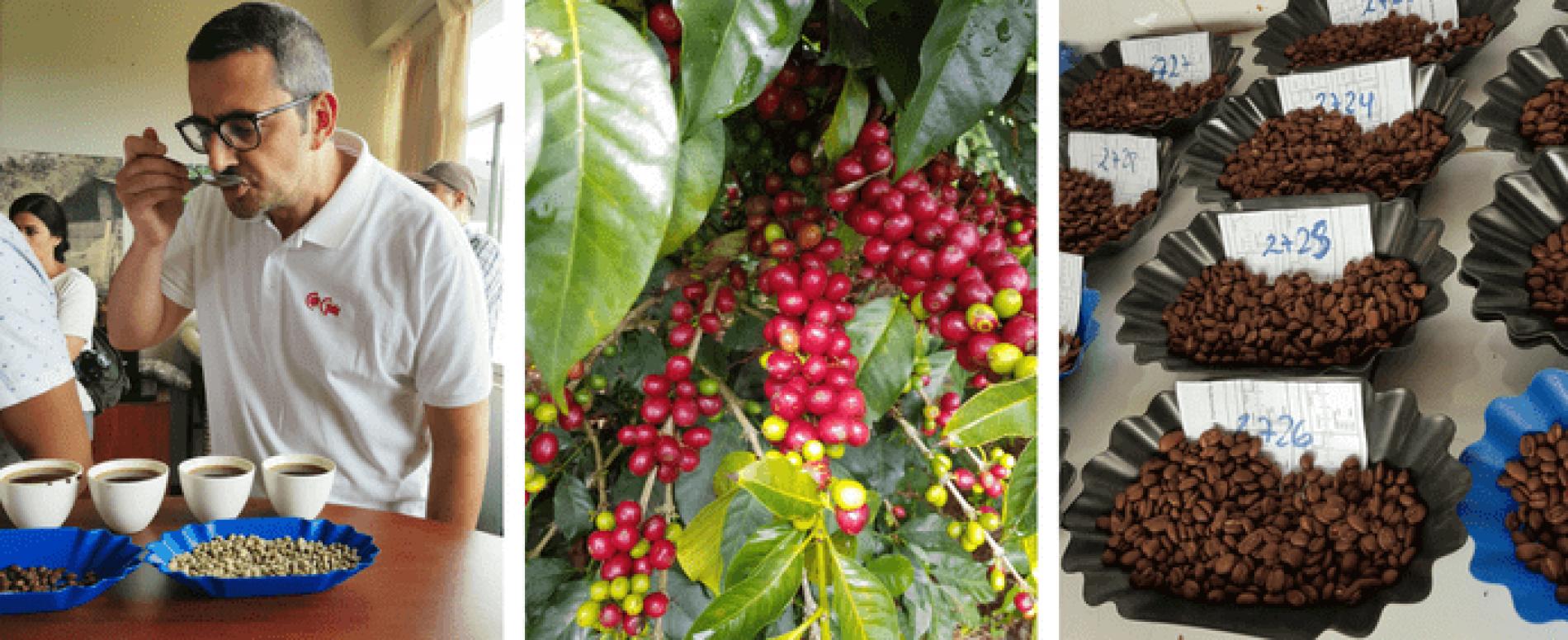 Caffè Gioia vola in Perù alla ricerca di Specialty Coffee