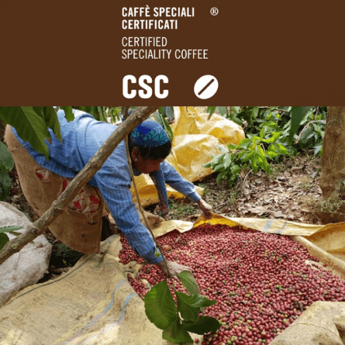 Con CSC – Caffè Speciali Certificati viaggio nell'India del caffè