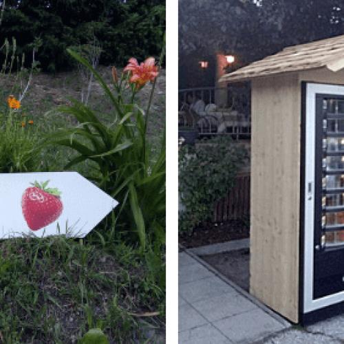 In Alto Adige My VitaminBomber la prima vending machine di frutta fresca